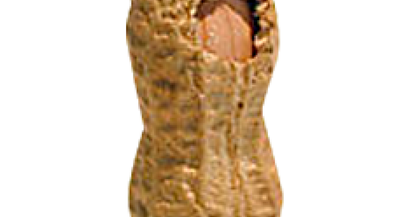 Peanut update